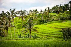 Reisebericht Bali Rundreise, Bali mit Kind und Roller, Bali Tipps zu Hotels und übernachten, Reiseblog reisen mit Kind, Bali Impfungen, Ausflüge,Schnorcheln