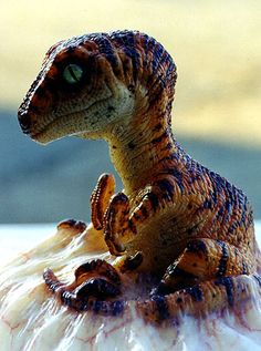 Baby Raptor <3 I wants him and I will dress him in a onesie and he will be mine forever.