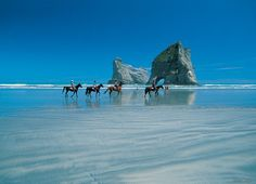 Horse trekking is 1 of many activities to enjoy in Golden Bay. At beautiful Wharariki Beach, the sand is rippled by the action of water & wind. Massive cliffs & sand dunes give the coast incredible character. Sometimes fur seals sun themselves on the rocks. (Photo by Tony Brunt)