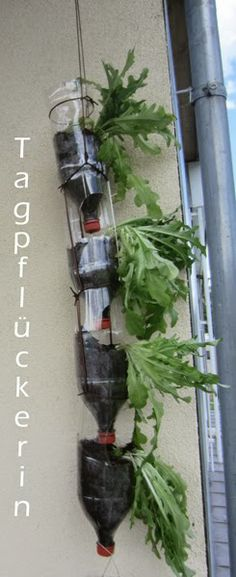 Salatbeete aus Plastikflaschen / Salad beds made with plastic bottles / Upcycling