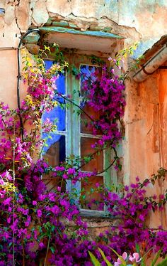 window with flowered vines