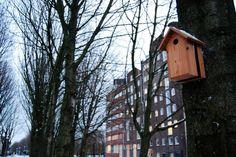 Woodpack vogelhuis - Koen