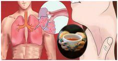 """In questo articolo ti presentiamo la guida più completa sulle piante ed erbe medicinali per purificare i polmoni e migliorare la respirazione. Per ciascuna pianta ti spieghiamo come usarla per poterne godere di tutti i benefici.  1 – Liquirizia (Glycyrrhiza Glabra): Famosa in tutto il mondo, è una pianta medicinale che aiuterà i polmoni e favorirà la salute della gola. Conosci il cibo che ti fa sentire """"al massimo"""" e quello che ti ruba salute ed energia?  2 – Tossilaggine comune (Tussilago…"""
