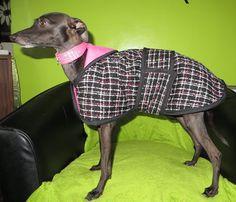 i Italian Greyhound, Greyhounds, Colourful Outfits