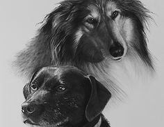 Portraits of dogs New Work, Behance, Portraits, Black And White, Dogs, Check, Animals, Animales, Black N White