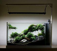 Aquascape. Корни Анубиаса в 19 литрах - AQUAFANAT - форум аквариумистов