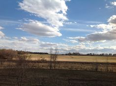 View to the South where I watch for the neighbors Black Angus herd rotate through his alfalfa fields. His bulls bellow all the time! Makes me smile.