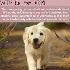 WTF Facts : funny, interesting & weird facts — How smart is the average dog - WTF fun facts Wow Facts, True Facts, Funny Facts, Random Facts, Crazy Facts, Wtf Fun Facts Funny, Weird Science Facts, Random Stuff, Strange Facts