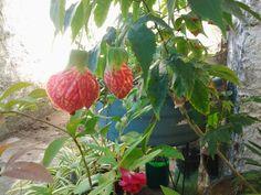 Sara said plantas e cactos - lanterninha japonesa
