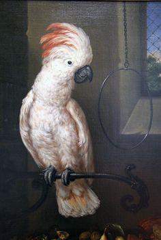 Bartolomeo_bimbi cacatua delle molucche,1716 Funny Pets, Funny Animals, Giuseppe Arcimboldo, Large Canvas, Painters, Still Life, Flora, Plants, Hilarious Animals