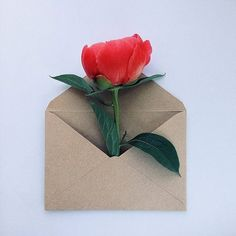 Flores de envelope