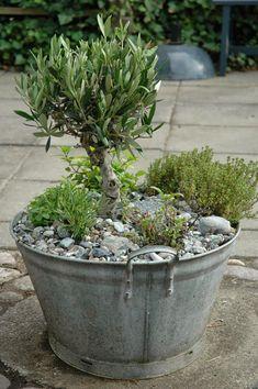 MEERESZEIT: Gartenfreude – Pflanzen ideen – Keep up with the times. Herb Garden, Indoor Garden, Garden Pots, Outdoor Gardens, Garden Fun, Pink Garden, Garden Sheds, Shade Garden, Garden Cottage
