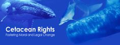 DECLARATION OF RIGHTS FOR CETACEANS: WHALES & DOLPHINS — Sign the declaration and join a global call to have rights formally declared for cetaceans.