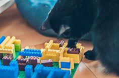 """Ein """"Fummelbrett"""" aus Lego Teilen, mit etwas Trockenfutter gefüllt, bietet gute Unterhaltung für Katzen. Insbesondere Wohnungskatzen freuen sich darüber, ihre Beute erjagen zu können und sind immer froh um Beschäftigung."""