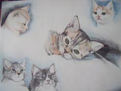 kittens (potlood)