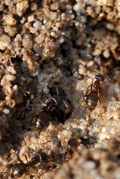 Awesome Ameisen wer mag sie schon