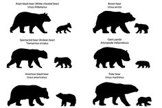 of bears and bear-cubs vector wild animal mammal carnivore collection set zoo wildlife fauna bear bear-cub cub kid asian american black white-chested spectacled andean brown polar panda giant panda silhouette outline contour Baby Bear Tattoo, Polar Bear Tattoo, Cubs Tattoo, Grizzly Bear Tattoos, Mama Tattoo, Silhouette Tattoos, Animal Silhouette, American Black Bear, Bears