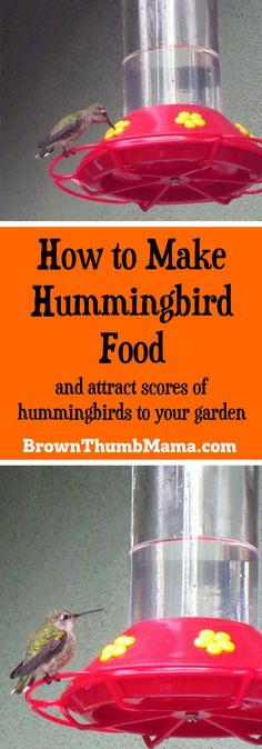 You can make hummingbird nectar with two items you already have in your kitchen. 1 cup white sugar to 4 cups water, boil I and cool, that's it! Plusortant tips on what you should NEVER feed to hummers! Terrariums, Make Hummingbird Food, Hummingbird Garden, Hummingbird Water Recipe, Humming Bird Nectar Recipe, Humming Bird Feeders, Humming Birds, Garden Projects, Pets