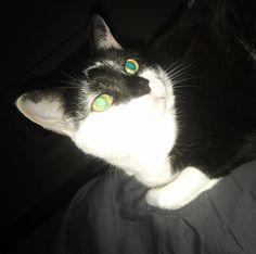 My green �� eyed ��Baby!! #jasmine #jazzy #catsofinstagram #cats #bnw #green #greeneyes http://misstagram.com/ipost/1548498320137442061/?code=BV9XwSTFNMN