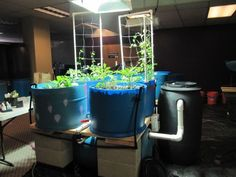 One of the aquaponics systems Portland Purple Water is testing at its storefront in Beaverton.