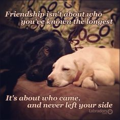 Here are some quotes and sayings why Labrador Retrievers are the best dogs . I Love Dogs, Puppy Love, Cute Puppies, Dogs And Puppies, Doggies, Animals And Pets, Cute Animals, Pomes, Dog Quotes
