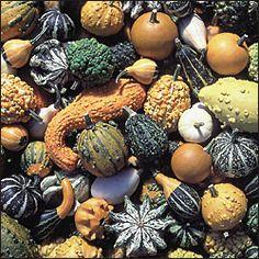 Seed Savers Exchange-heirloom veggy / herb / flower seeds