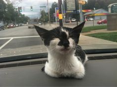 I got a new kitten and this is her one the way home!