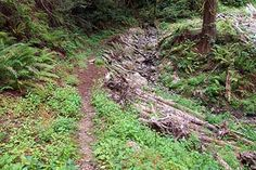 Community-Based Forestry and Watershed Restoration Tour | Salmonid Restoration Federation  Urban creek work with rock and logs