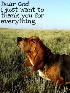 Dear God, I just want to thank you for everything.