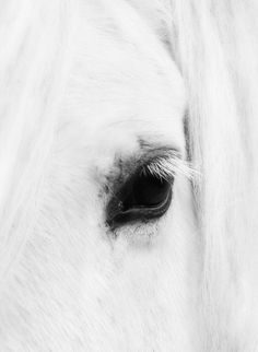 Horse eye lashes are so very long and lovely. ~ETS