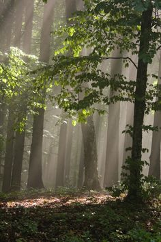 Light forest -
