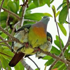 #mother #bird #tree #family #green