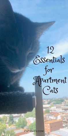 Looking for ways to make your cat happy? This cat essentials list is packed full of indoor cat enrichment ideas. These are the best happy cat tips from a cat professional. Learn how to provide enrichment for indoor cats with cat supplies, cat trees, cat toys, and more fun cat care tips. These are 10 essentials you need for a happy cat. The best cat stuff, cat supplies, and cat advice that will help show your cat love. Get these tips! #enrichmentideas #pamperedpets #catcaretips #catmom… Cat Apartment, Calming Cat, Cat Care Tips, Cat Behavior, Inevitable, Cat Toys, Indoor Cats, Cat Life, Cool Cats