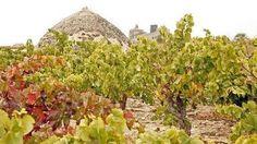 Cultivar viñedo viejo se primará con 600 euros
