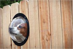 PETPEEK | WINDOW FOR YOUR FENCE