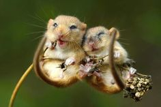 10 things you didn't know about dormice