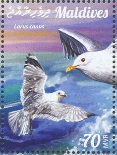 Mew Gull stamps - mainly images - gallery format