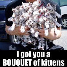 i love flowers, but a bouquet of kittens? yeah, i'll take that.