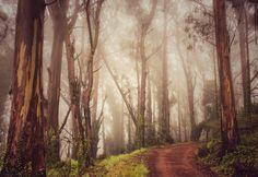 Contributor Sangeeta Dey found this beautiful grove of eucalyptus trees in Sausalito, Calif.
