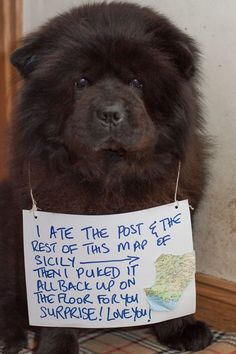 Chows are the best😂