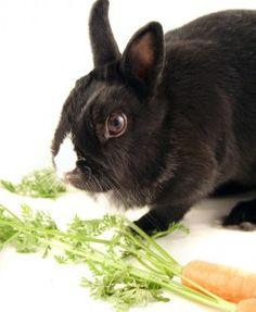Health and Nutrition for Small Pets: Rabbit and Guinea Pig - Small Pets Pet Care Corner - PetSolutions