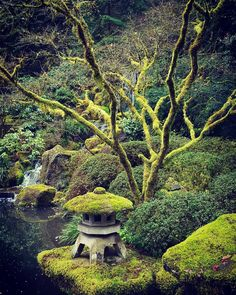 Chasing after the world brings chaos.  Allowing it to come to me brings peace. -Zen Gatha  #BeardedPsychic #meditation #psychic #peace #zengarden #zen #buddha #buddhism #buddhadharma #divine #dharma #naturephotography #nature #japan #japanese #zengatha #inspiration #inspirationalquotes #wisdom #wordsofwisdom #japanesegardens #portland #pdx #mindfulness #prosperity #scenery Moss Garden, Bonsai Garden, Portland Japanese Garden, Japanese Gardens, Geisha Japan, Japanese Lamps, Stone Lantern, Japan Garden, Garden Waterfall