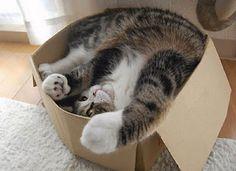 Blog dos Geminianos: Hoje é o dia mundial dos gatos. Sem essa de disput...