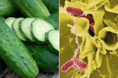 U.S. Officials confirmed that a second person has died after eating cucumbers imported from Mexico that were contaminated with salmonella poona, and at least 341 people in 30 states have developed a serious case of Salmonella food poisoning.  fightforvictims.com