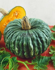 """""""The sweet, dry, yellow-orange flesh is excellent for soups, pies, pastas and Italian gnocchi. Italian Gnocchi, How To Cook Squash, Squash Seeds, Squashes, Fresh Cream, Edible Plants, Flower Seeds, Gourds, Pumpkins"""