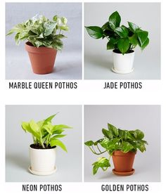 Try these houseplants!  http://ift.tt/28V7WMT