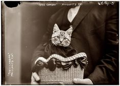 In 1910, on the first airplane flight across the English Channel to carry a passenger, American aviator John Moisant flew from Paris to London accompanied by both his mechanic and his cat, named either Mademoiselle Fifi or Paree, depending on which newspaper you believe.
