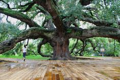 The Treaty Oak - Jacksonville, Florida.