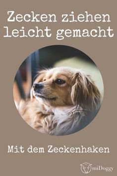 Zecken beim Hund ziehen   Tipps und Tricks Dog Owners, Tricks, Dog Love, Dogs, Halter, Animals, Community, Vet Office, Animals Dog