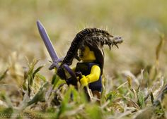 Hairy Situation by ~PrometheanPenguin on deviantART